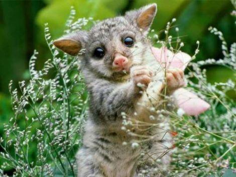 cute_litle_animals_001