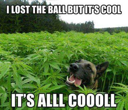 dogweed
